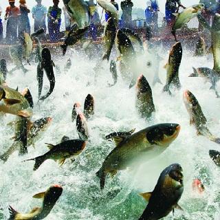 Aquaculture optimization