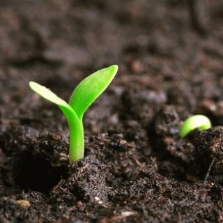 Soil Remediation Technology